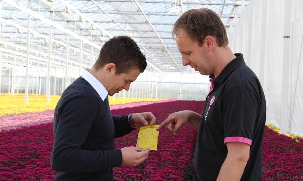 """Patrick van Uffelen (rechts) tegen Dennis Ammerlaan: """"BotaniGard werkt goed tegen volwassen trips en de larven van wantsen. Bij hoge plaagdruk is dat heel welkom."""""""