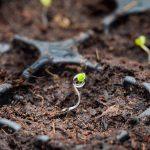 Sector laten zien dat aardbeien goed en duurzaam op steenwol zijn te telen