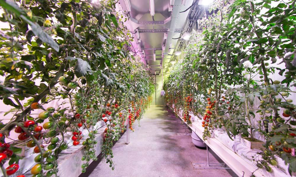 Kennisdeling kan ontwikkeling vertical farming stimuleren
