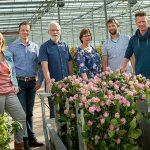 Kwekerij Van der Hulst houdt stand ondanks Afrikaans 'rozengeweld'