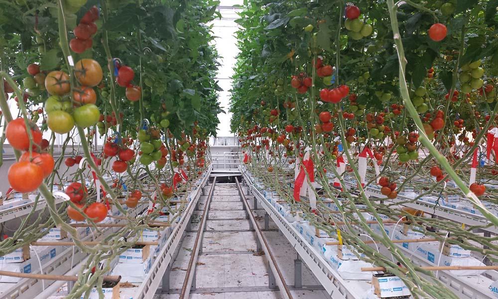Grenswaarden Na in tomaat en paprika hoger dan gedacht