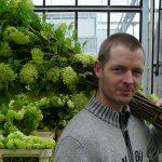 Stevigheid plant: samenspel silicium, celspanning en inhoudsstoffen