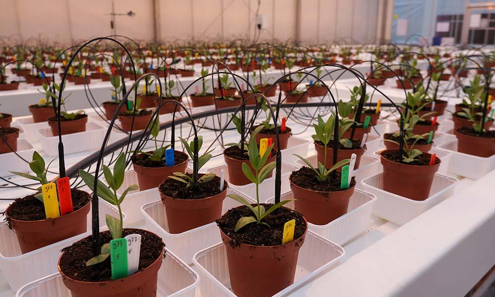 Biologische bestrijding Fusarium in sierteelt