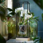 Dutch Tulip Awards voor beste marktintroducties uitgereikt