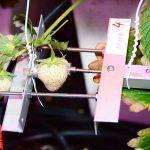 Continu meten aan de plant maakt precisieteelt mogelijk