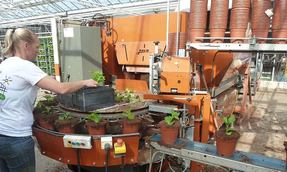 Goed onderhoud voorkomt ongewenste stilstand op potplantenbedrijf