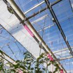 Nieuw zomerscherm van Svensson gelanceerd op HortiContact