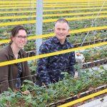 IPM in aardbeien vormt nog een hele uitdaging, onderzoek loopt