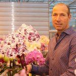Phalaenopsisteler en -veredelaar vernieuwt op meerdere fronten