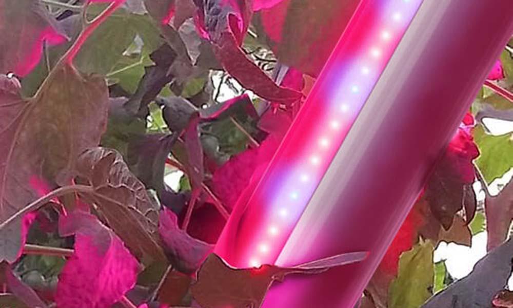 Nieuw LED-armatuur welkome aanvulling op SON-T