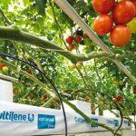 Worteltemperatuur van grote invloed op opname van water en nutriënten