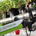 Aardbeienplukrobot werkt nog beter bij aanpassing ras en teeltsysteem