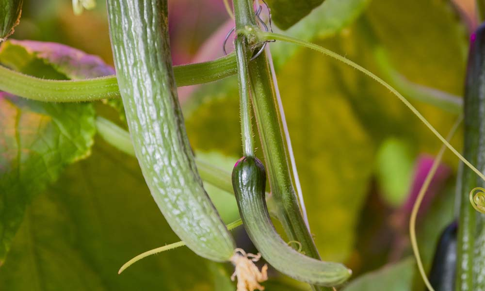 Vruchtontwikkeling nog onvoldoende in de winterperiode