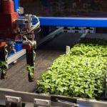 Onderzoekers WUR ontdekken hoe plantenweefsel herstelt na schade