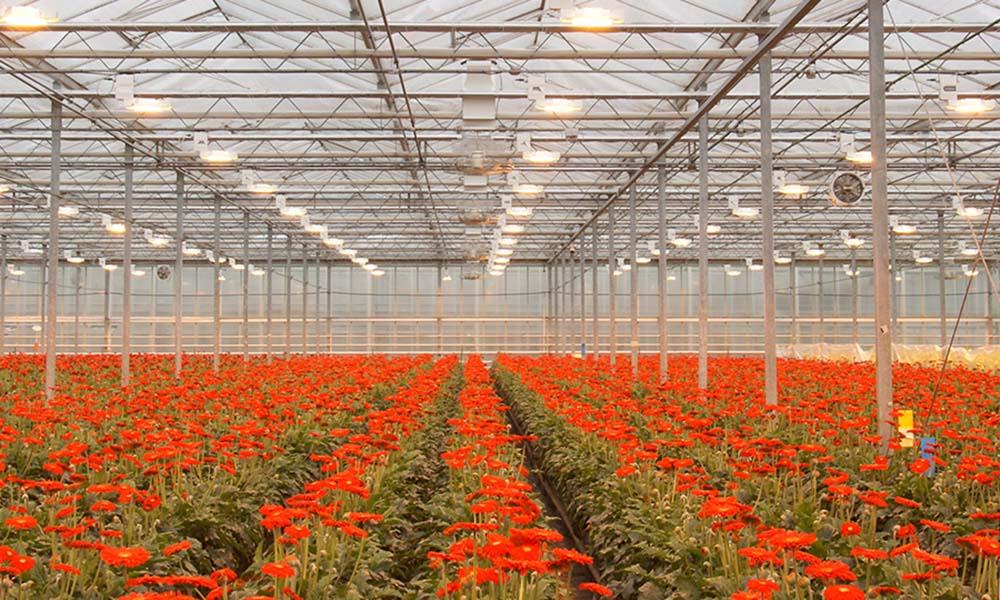 Plant Empowerment: balanceren op het koord van fysica en fysiologie