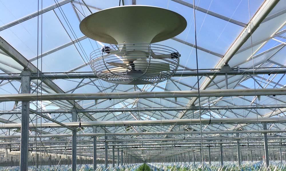 Een optimaal microklimaat op plantniveau door verticale luchtcirculatie