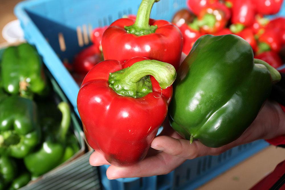rode en groene paprika