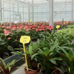 Zout remt vermogen van planten om te strekken