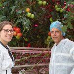 Vochtige kaslucht levert duurzame warmte voor fossielvrije teelt tomaat