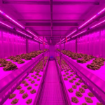 Priva start joint venture Infinite Acres voor indoor farming