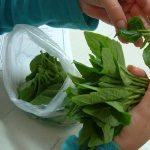 Plantenverordening