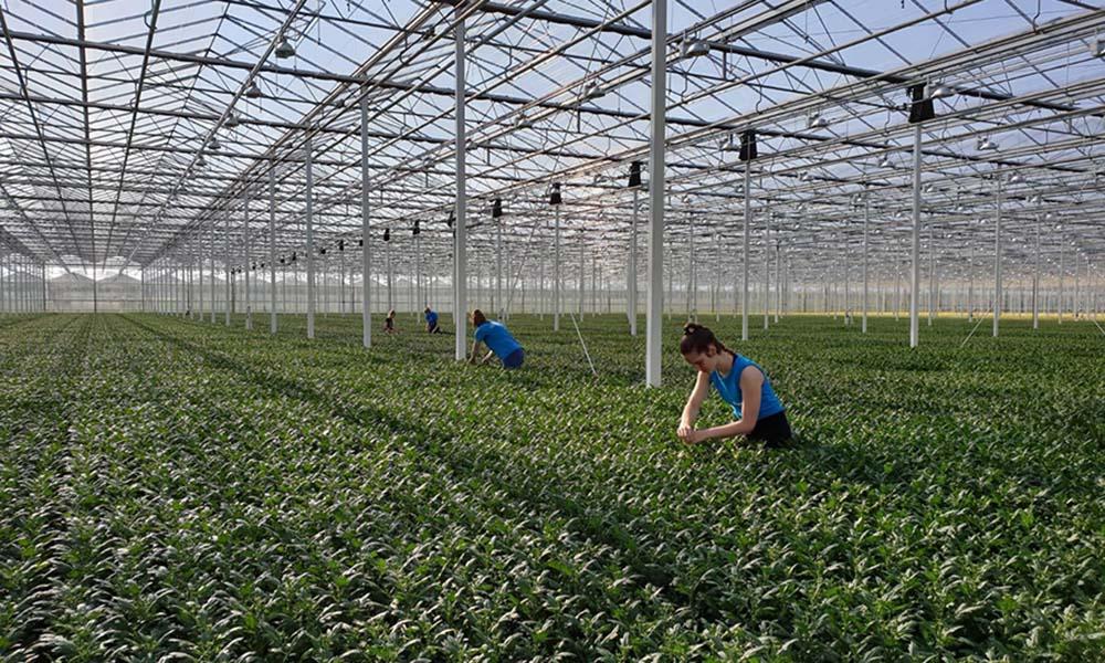 Laat jongeren zien dat de tuinbouw leuker is dan ze denken