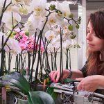 'Snellere aanleg en uitgroei van bloemtakken met verrood licht'