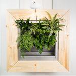 plantensysteem in kantoor voor luchtzuivering
