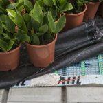 Het Nieuwe Telen in potplanten pakt – tot nu toe – goed uit