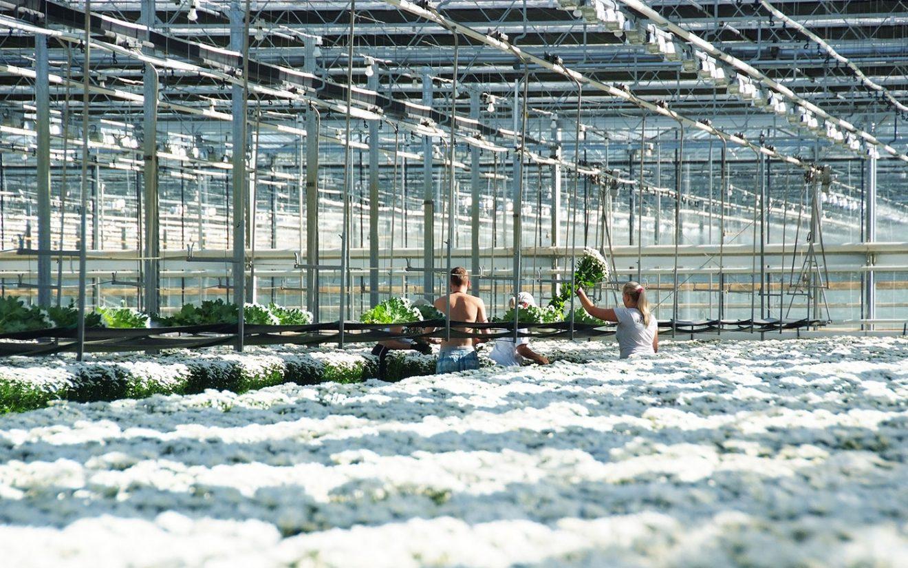 Bijscholing ondernemer en medewerkers in Gelderland komt op gang