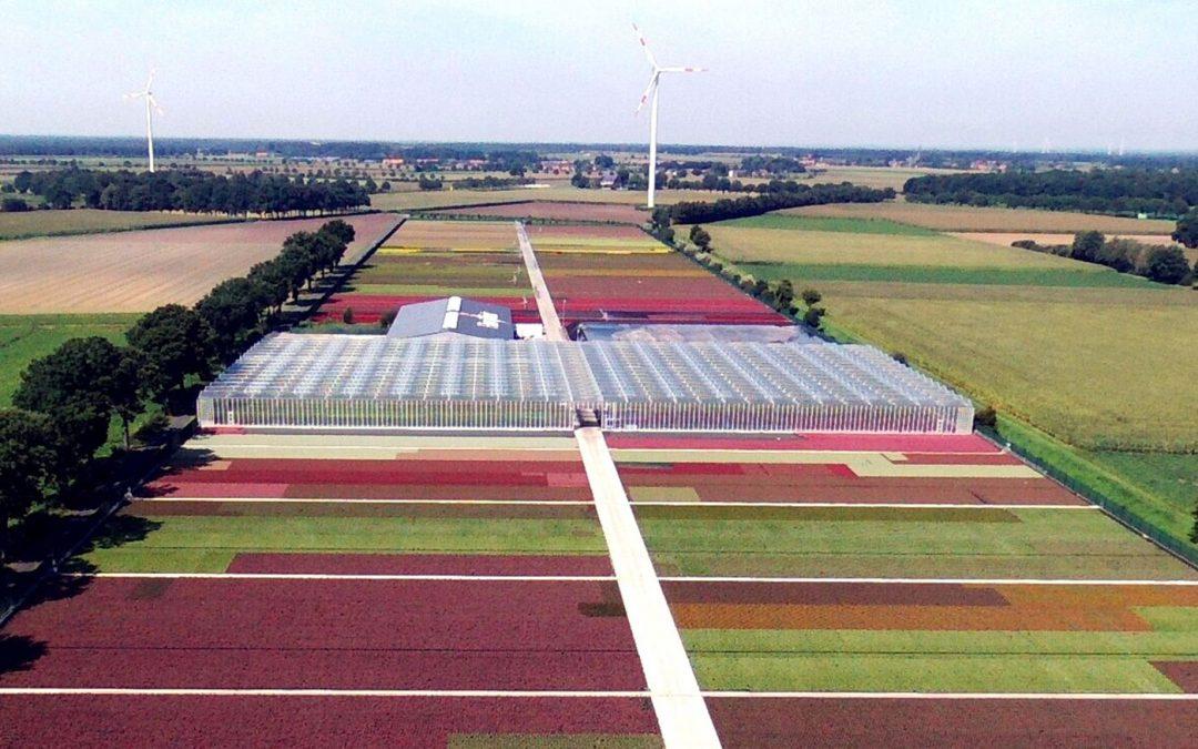 De 50 Nederlandse telers bij Decorum krijgen Duitse collega