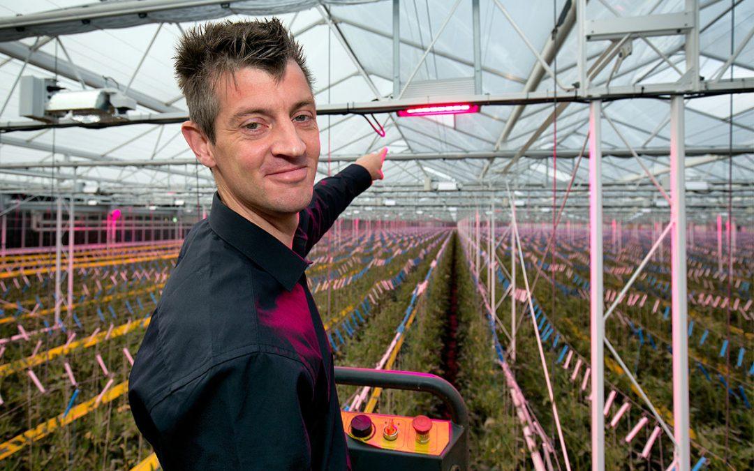 'Hybride belichting zorgt jaarrond voor kwaliteitsvolle tomaten'
