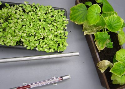 Kunststoffen testen op schadelijke dampen voor planten