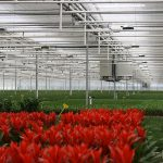 'Meer schermen geeft opvallende resultaten in potplanten'