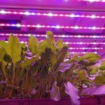 'Alleen sla en microgroenten passen echt in een vertical farm'