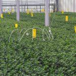 CO2-verdeling meten tussen het gewas