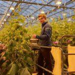 Productie komkommers met 30% gestegen