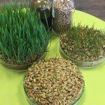 Kansrijke grondstof voor coatings van zaden en mestkorrels