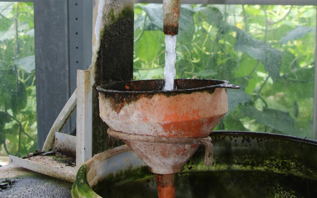 Van waterkwaliteit naar watervitaliteit, van strijd naar balans