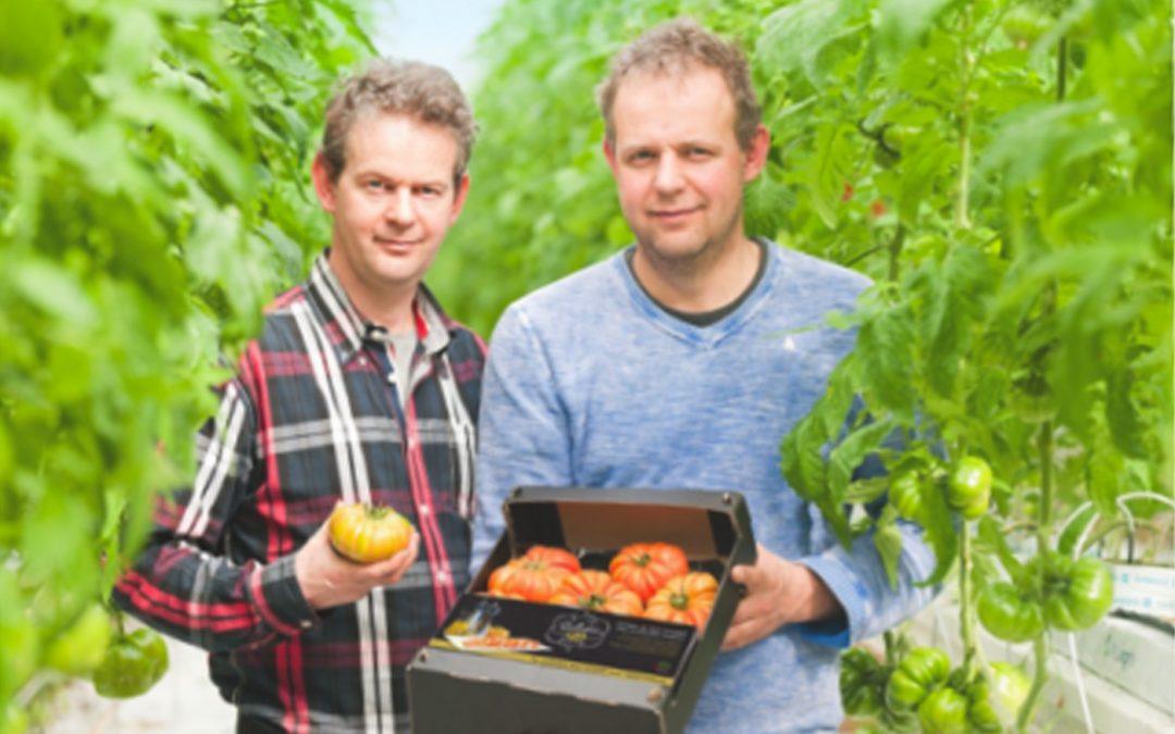 Van den Belt installeert systeem voor Het Nieuwe Telen op 7 ha belichte tomaat