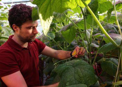Optimalisatie lichtspectrum voor jaarrond komkommers