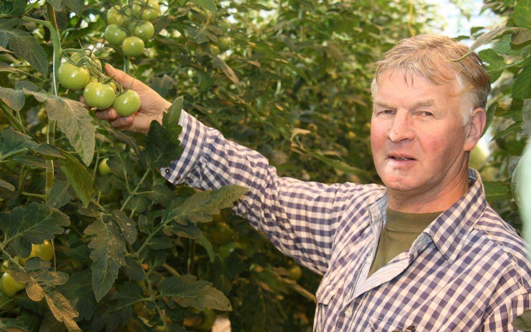 '2019 tot nu toe positief jaar, tomatenvirus blijft onzekere factor'