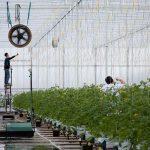 Flexarbeid per 1 januari flink duurder door WAB-wet