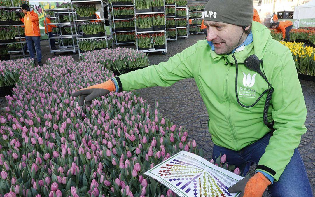 Na Amsterdam ook Antwerpen in de ban van de tulp