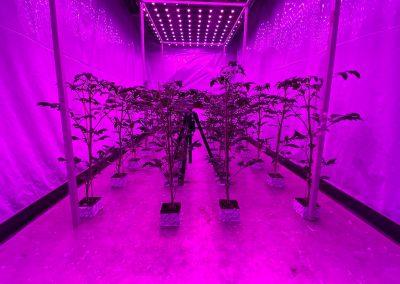 Plantresponse op lichtbehandeling koppelen aan genexpressie