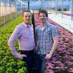 'Betere bladkwaliteit chrysant onder verticale ventilatoren'