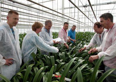 Unieke samenwerking amaryllistelers verzekert voortgang onderzoek