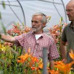 Snelle stappen naar sterkere rassen in sierteelt