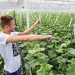 Getopte plant vereist aanpassing temperatuurregime en snoeibeleid