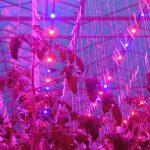 Aandacht voor belichting, lichthinder, handel in energie en WKK